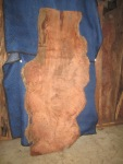 "#405. Redwood Lace Burl (90""L x 34.5""W x 3""T) $3,249"