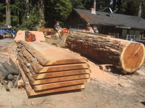 Milling Redwood logs.
